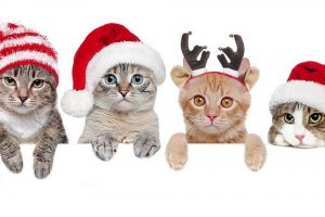smart kittens cash flow a stress-free holiday